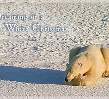 Polar dreams of a White Christmas by Owed to Nature