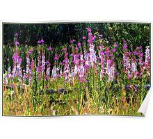 Nature's Garden Poster