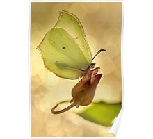 Yellow butterfly on the dried flower Poster