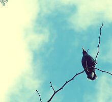 Be as a bird perched on a frail branch that she feels bending beneath her... by the-novice