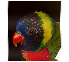 Red beak, yellow garland! Poster