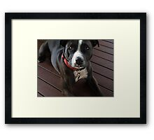 Puppy Love .... Ris's baby Framed Print