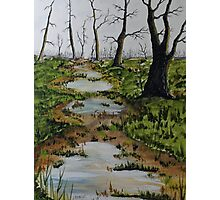 Old Walking Trail Photographic Print