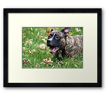 Can I get it now? Framed Print
