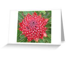 Star Waratah Greeting Card