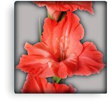gladiola in pastel tones Canvas Print