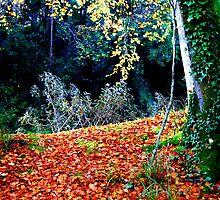 all Fall down... Ireland by Pat O Callaghan
