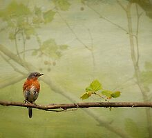 Until Spring by Lois  Bryan