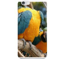 Blue And Gold Macaws iPhone Case/Skin