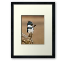 Perched Kingfisher - Stoney Creek Ontario, Canada Framed Print