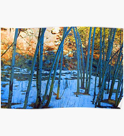 A row of Aspen trees in Winter Poster