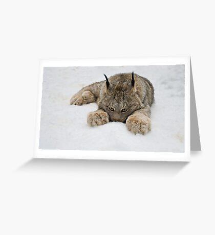 Lynx in Snow Greeting Card