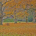 fall day by mikepaulhamus