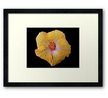 Hibiscus Flower - Up Close Framed Print