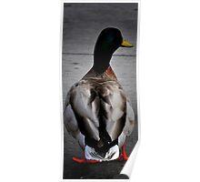 Duck Strut Poster
