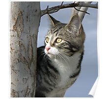 Tabby in a Tree Poster
