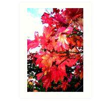 colors of Autumn no.4 Art Print