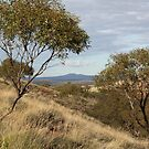 Gawler Ranges 1 by Cheryl Parkes
