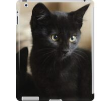 Beautiful Black Kittens iPad Case/Skin