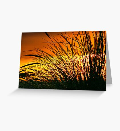 Grass in the Sunset Greeting Card