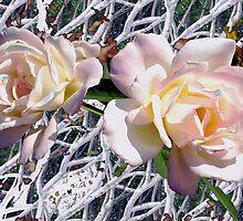 Bramble roses by ♥⊱ B. Randi Bailey