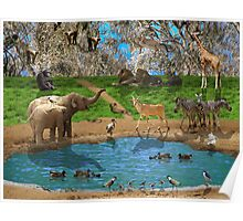 Animals kingdom Poster