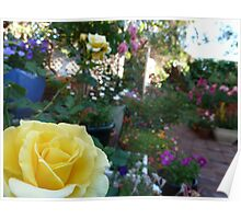 Yellow Rose And The Rainbow Colours Poster