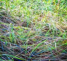 Abstracted Grass by James Zickmantel