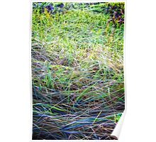 Abstracted Grass Poster