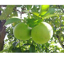 Hanging Limes - N900 Photographic Print