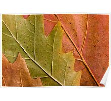 Natural autumn leafs Poster