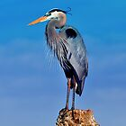 The great blue Heron by Davidsdigits