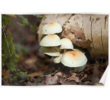 Tree Fungi Poster