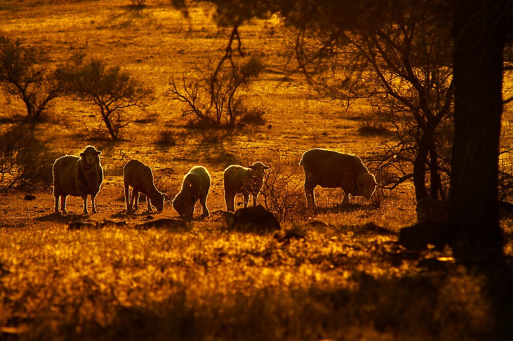 South Australia landscape serie 08 by ZoltanBalogh
