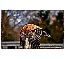 """ This is mine""    (Birds of prey centre Andover) Photographic Print"