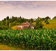 Road to Asolo by Paul Weston