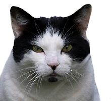 Black and White Cat. by Lesogorman