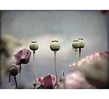 ~ Done and Dusty Pink ~ Photographic Print