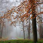 Mist in Sherbrooke by Robyn Lakeman