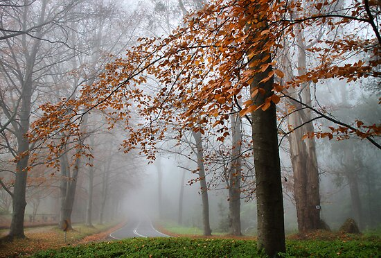 Mist in Sherbrooke by Robyn Lakeman