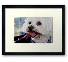 OK, next?   Ball!!!  you said ball !! Framed Print