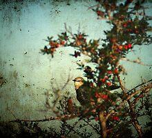 Peek a Boo by Jonicool