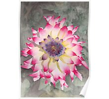 Point Defiance Dahlia Two Poster