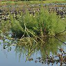 Reflection in the lake by Mustafa UZEL