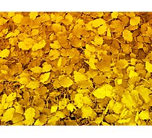 Golden carpet Photographic Print
