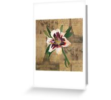 Lily of France Greeting Card
