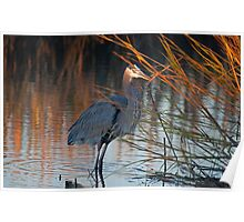 GREAT BLUE HERON Just as the sun goes down Poster