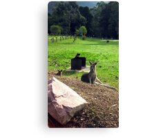 Just having a Rest! Canvas Print