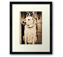 Royal Lab Framed Print