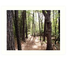 Wooded Path Art Print